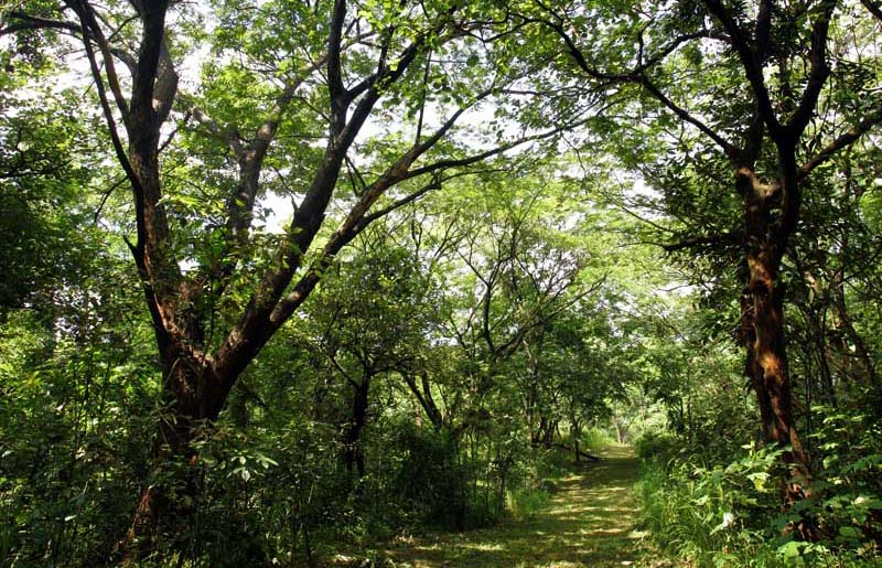 Angono Rizal Real Estate Home Lot For Sale At Forest